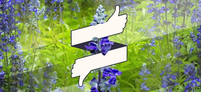 Tipps & Richtlinien Für Den Gebrauch Von Salvia