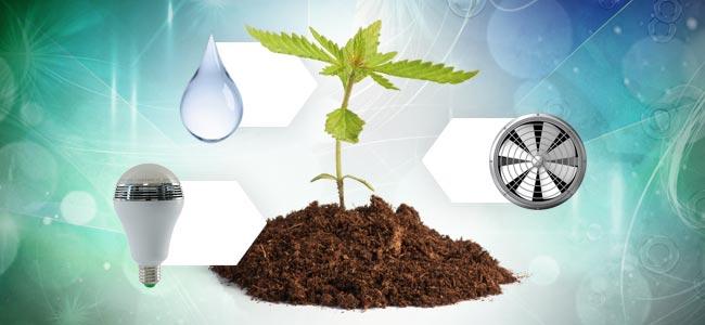 Cannabisanbau in Erde