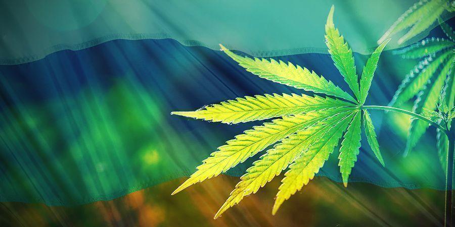 Der Ursprung von Cannabis Ruderalis