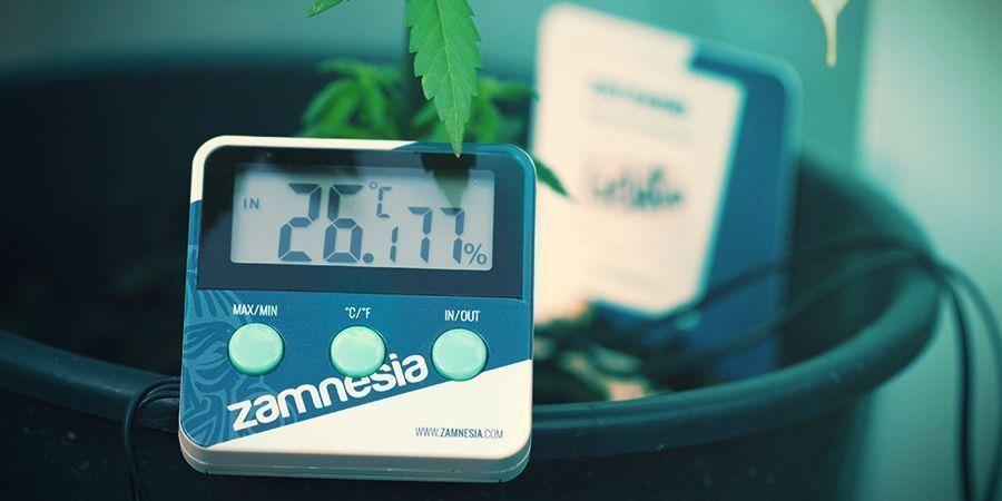 Cannabis: Optimale Photosynthese-Bedingungen