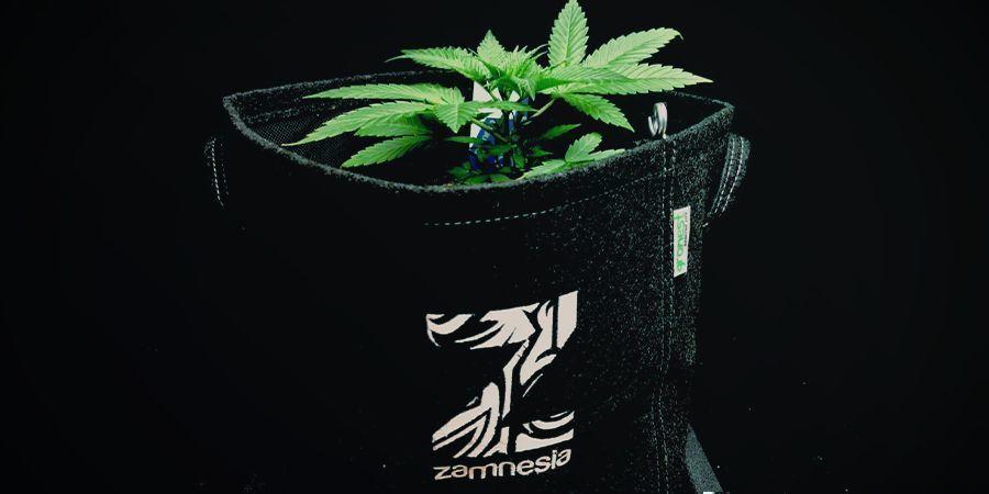 Stofftöpfe Aka Smart Pots Cannabis