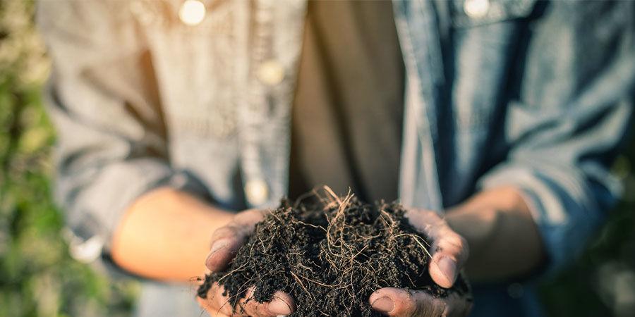 Cannabisblätter als Kompost verwenden