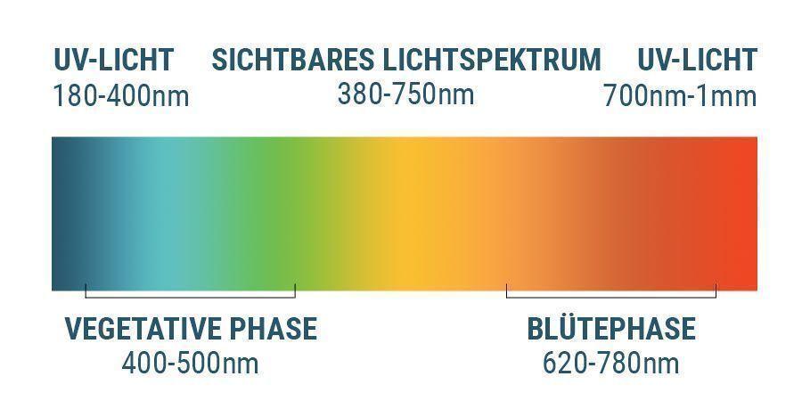 Das Lichtspektrum Und Cannabis