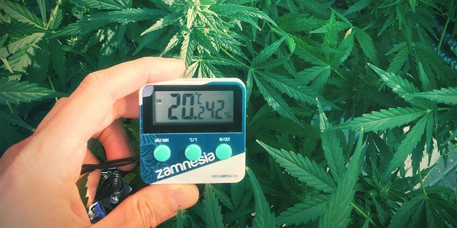 Optimale Temperaturbereich Um Marihuana Anzubauen