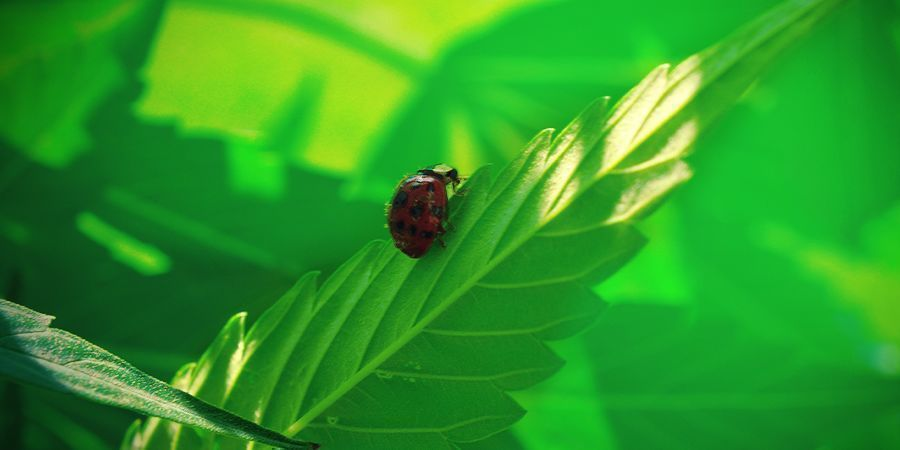 Vorteile Der Natürlichen Welt