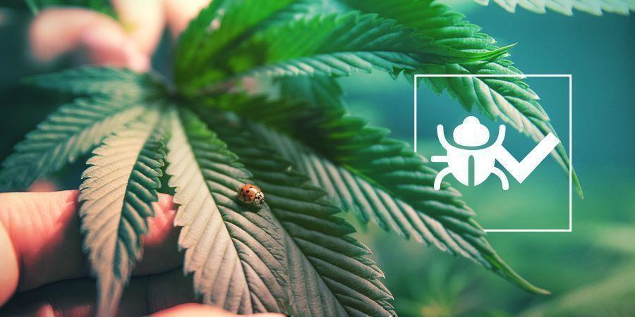 Freundliche Käfer & Insekten