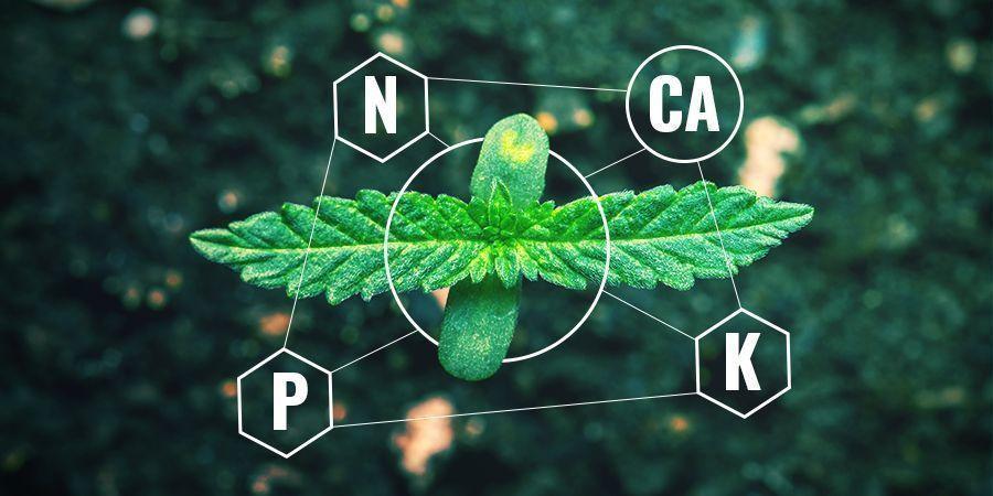 Kalzium in chemischem vs. organischem Dünger