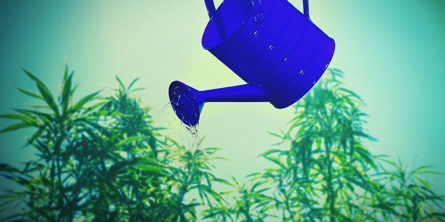Cannabis-Anbautipps rund um Kalzium