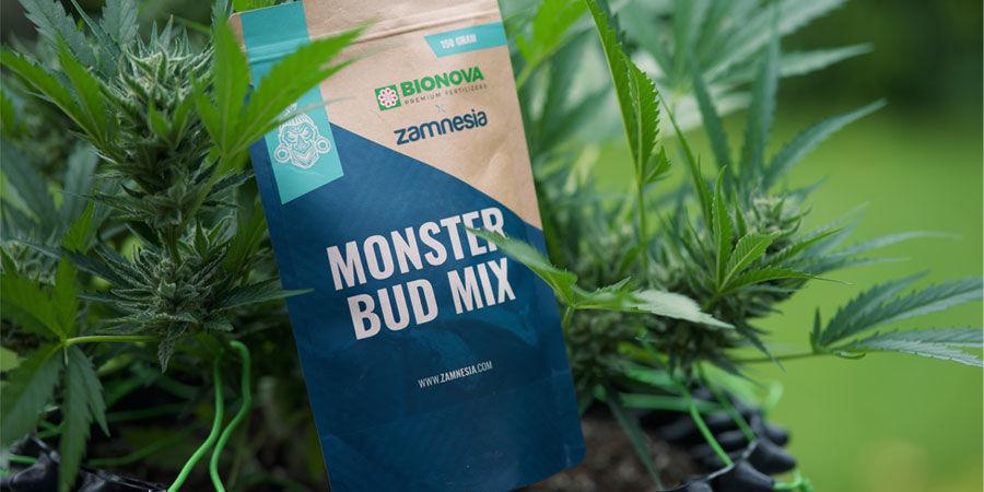 Welche Nährstoffe benötigen autoflowering Cannabispflanzen?