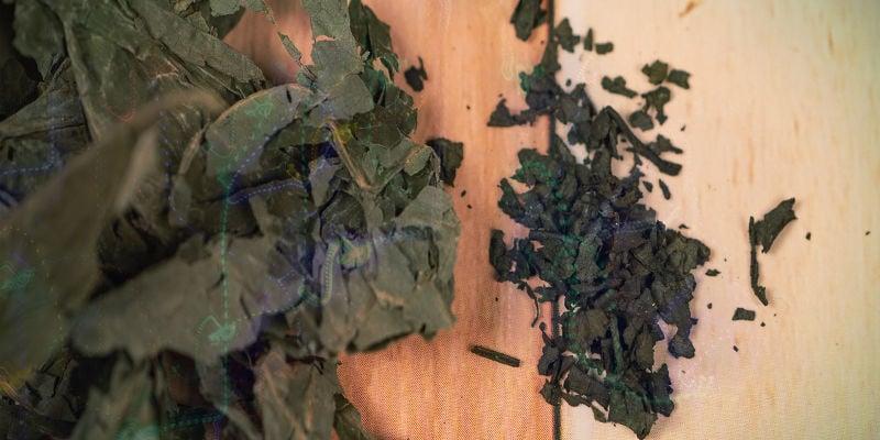 Warum verursacht Salvia – manchmal – einen so unangenehmen Trip?