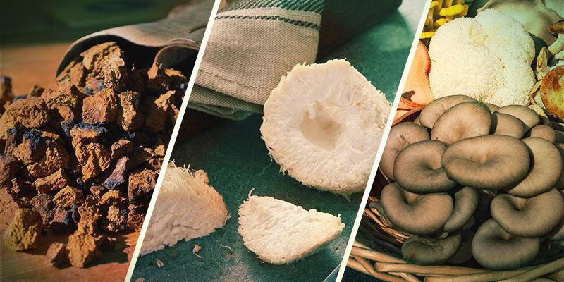 Welche Pilze sind adaptogen?