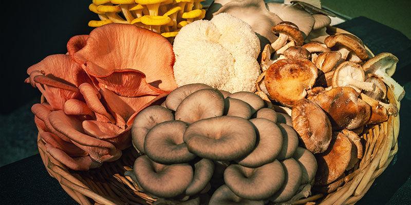 Welche Pilze werden üblicherweise für Tinkturen verwendet?
