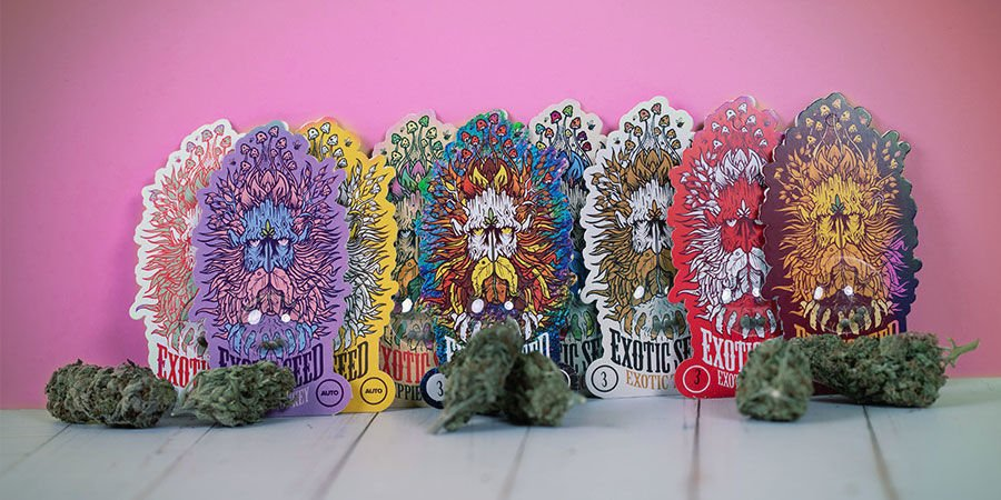 Preisgekrönte Cannabissorten Exotic Seed