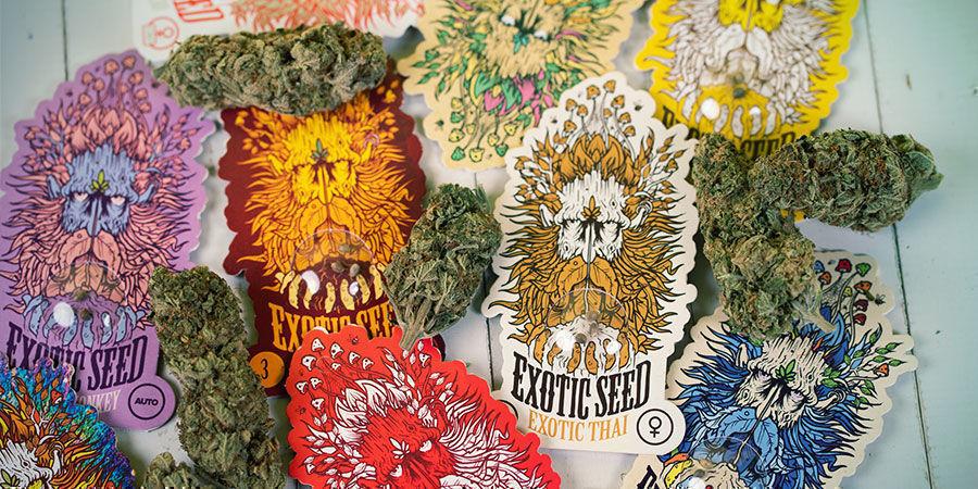 Cannabissamen Exotic Seed verpackt