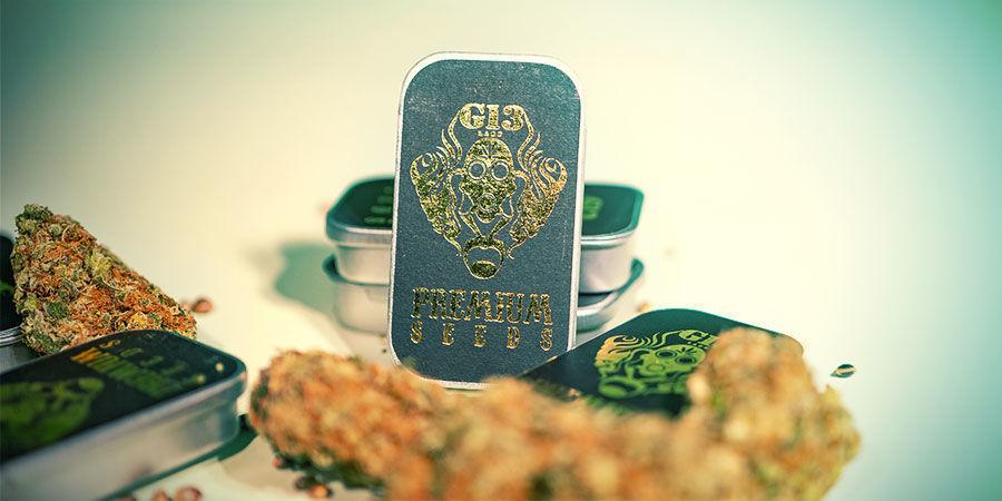 Top 3 Cannabissorten G13 Labs
