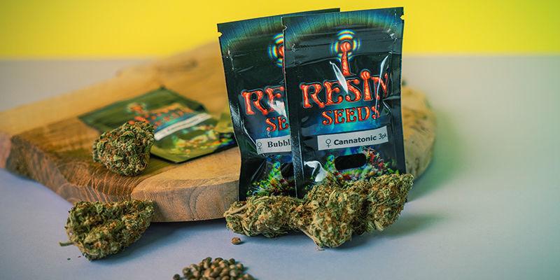 Resin Seeds: feminisierte Cannabissamen