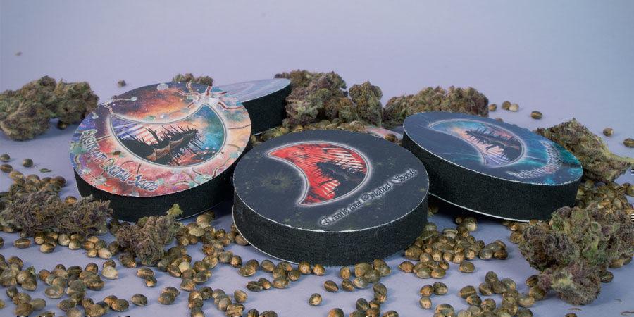 Cannabissamen GeneSeeds verpackt