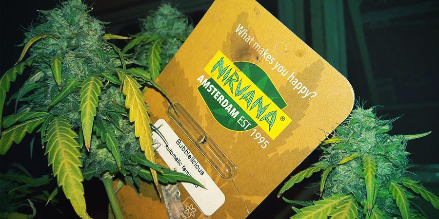 Nirvana Seeds Verpackungen