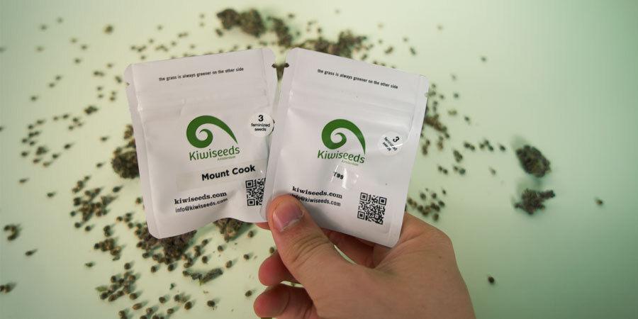 Wie Werden Die Cannabissamen Von Kiwi Seeds Verpackt?