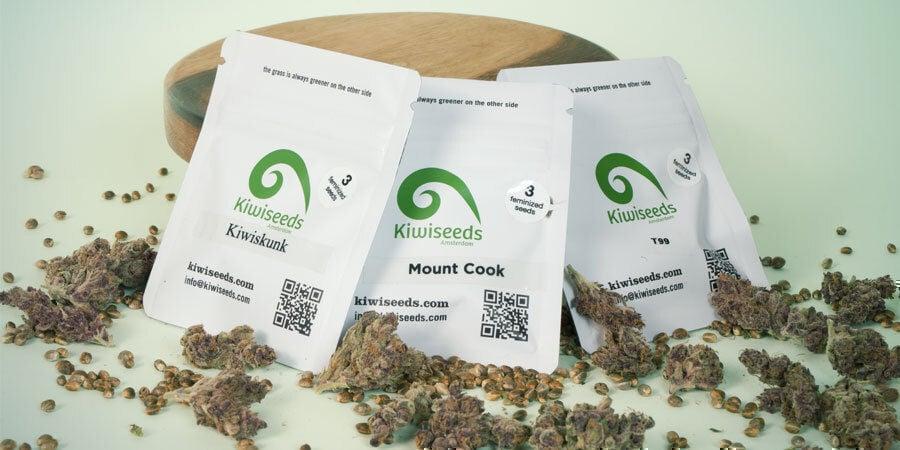 Welches Sind Die 3 Besten Cannabissorten Von Kiwi Seeds?