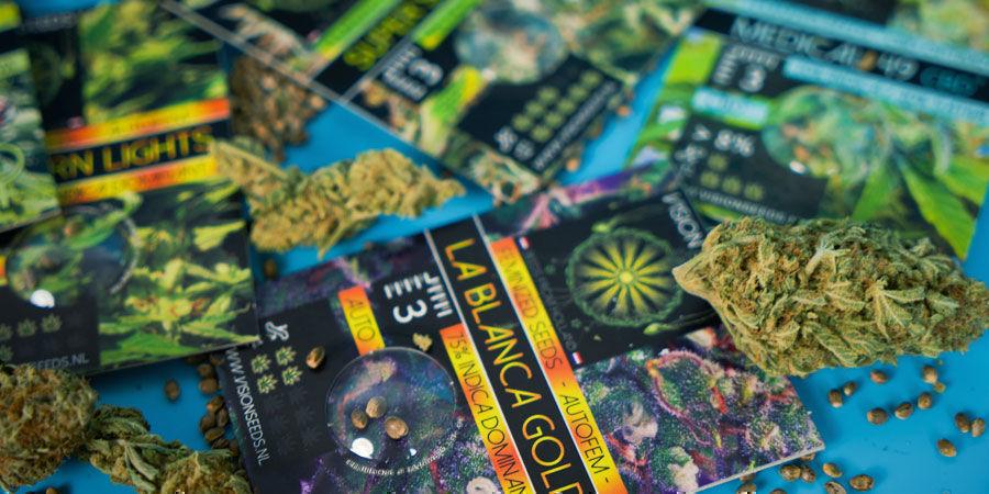 Die Beliebtesten Cannabissamen Von Vision Seeds