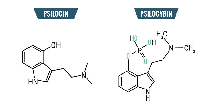 Psilocybin & Psilocin