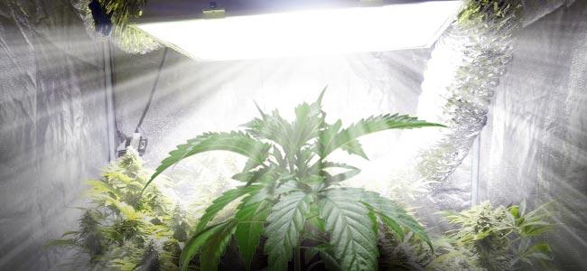 Cannabis Zuchtraum