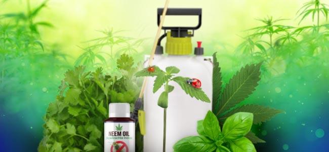 Natürliche Pflanzenpflege