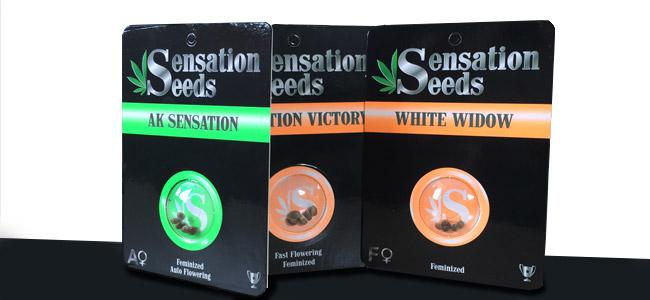 Verpackungen von Sensation Seeds