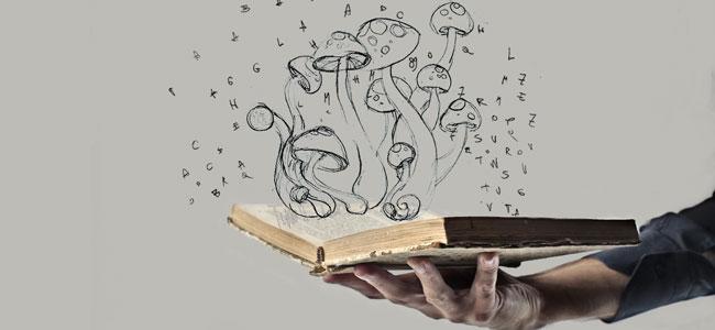Ursprung des Zauberpilzes
