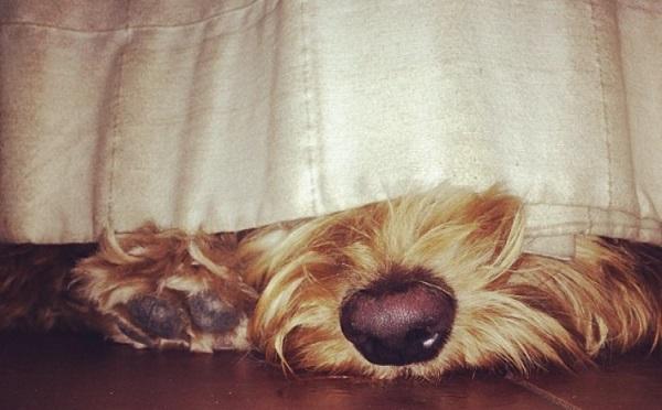 Sherry Hund