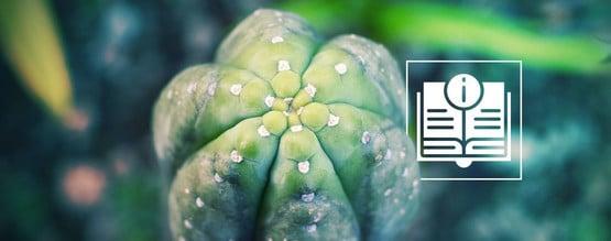 San-Pedro-Kaktus: Alles Was Du Wissen Musst
