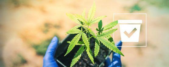 Den Richtigen Behälter Für Cannabispflanzen Auswählen