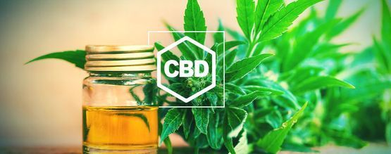 Alles, Was Du Über CBD Und CBD-reiches Weed Wissen Musst