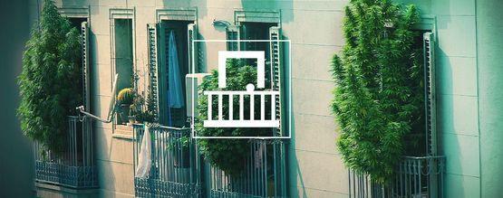 Warum solltest Du Cannabis auf Deinem Balkon oder Deiner Terrasse anbauen?
