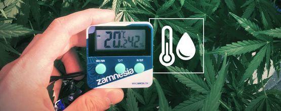 Luftfeuchtigkeit Im Cannabisanbauraum