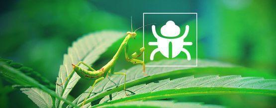 Nervige Käfer Und Insekten