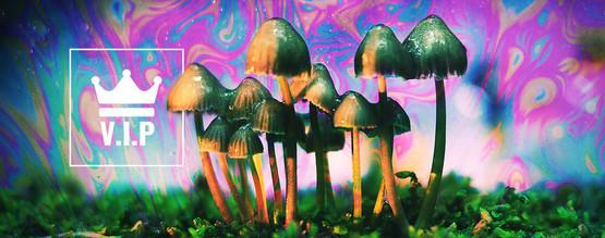 Psychedelische VIPs