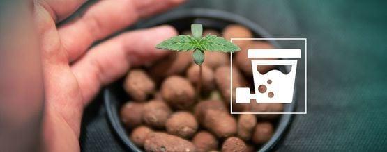 Wie Du Mit DEC-Hydroponik Eine Riesige Cannabisernte Einfährst