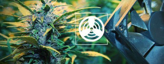 Belüftung Im Cannabis Zuchtraum