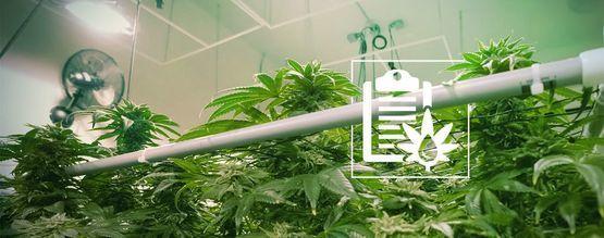 Die Verschiedenen Arten Von Hydrokultursystemen Für Den Cannabisanbau
