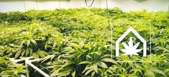 Wie Man Den Ultimativen Anbauraum Für Cannabis Anlegt Und Instand Hält