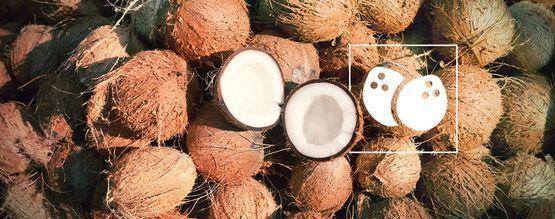 Alles, Was Du Über Den Cannabisanbau In Kokos Wissen Musst