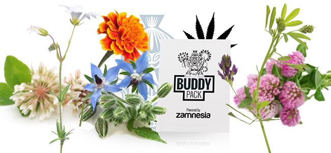 Cannabis Begleiter Pflege