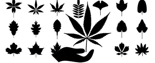 Cannabis Waldgarten