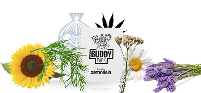 Cannabis-Begleiter ziehen Insekt an