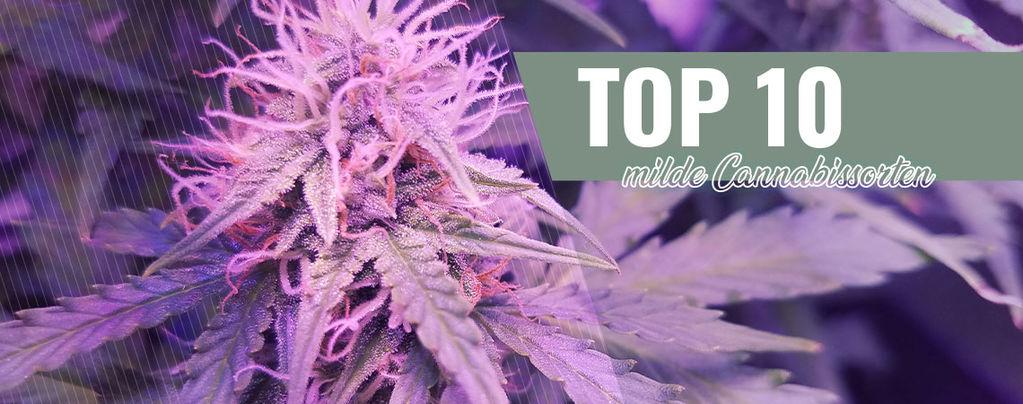 Top 10 Milde Cannabissorten