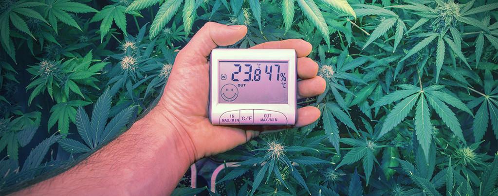 Perfekten Temperaturen Anbauen Cannabis