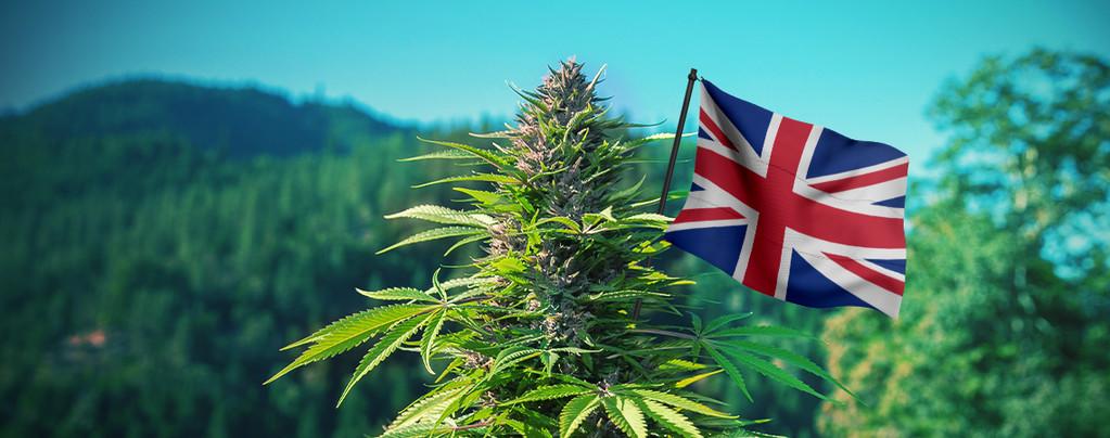 Beste Cannabis Samen VK