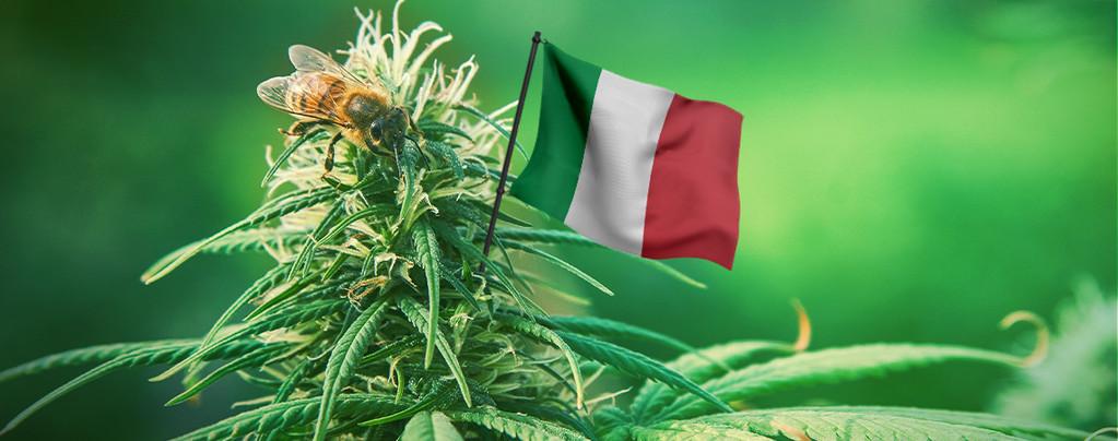 Beste Cannabis Samen Italien